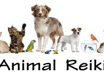 Reiki infinite healer for pets